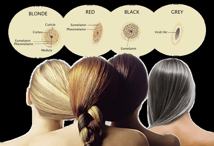 melanin u dlaci, količina pigmnta u dlaci, boje dlaka